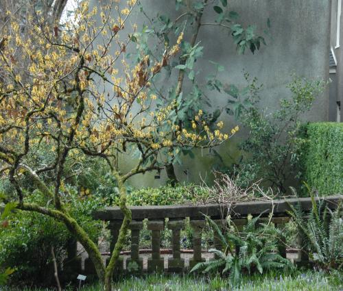 chapel_garden chapel garden - Elk Rock Garden