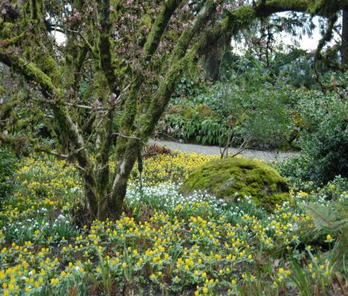 spring_walk - Elk Rock Garden